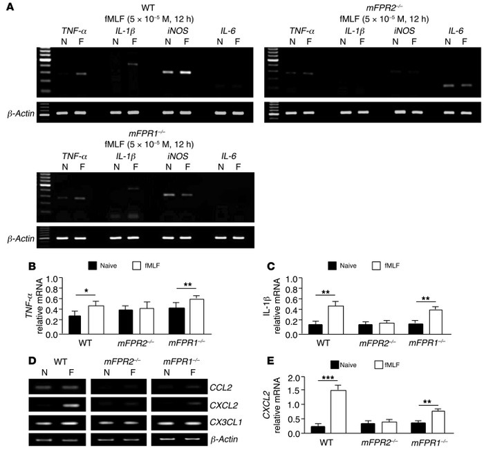 Expression of cytokine and chemokine mRNA in mouse colonic mucosa induce...