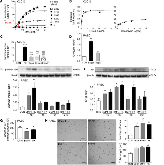 High-dose FK506, the main activator of BMP signaling found in the high-t...