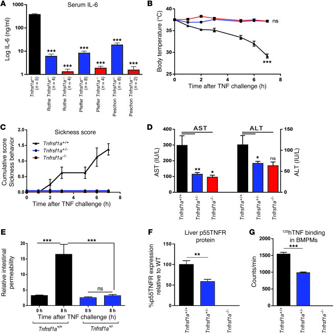 Resistance of Tnfrsf1a+/– mice to TNF-induced lethal inflammation.   (A)...