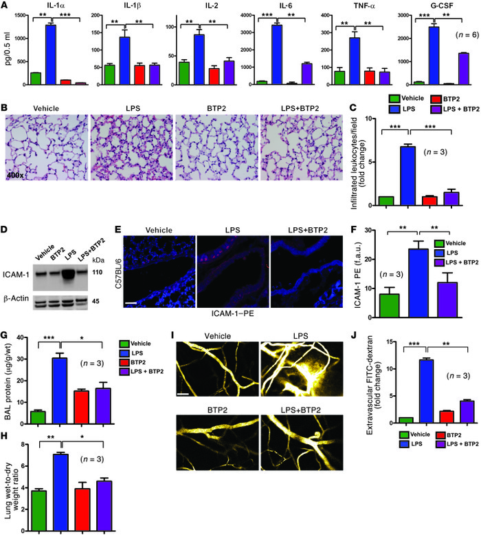 BTP2 attenuates LPS-induced lung inflammation and vascular endothelial i...