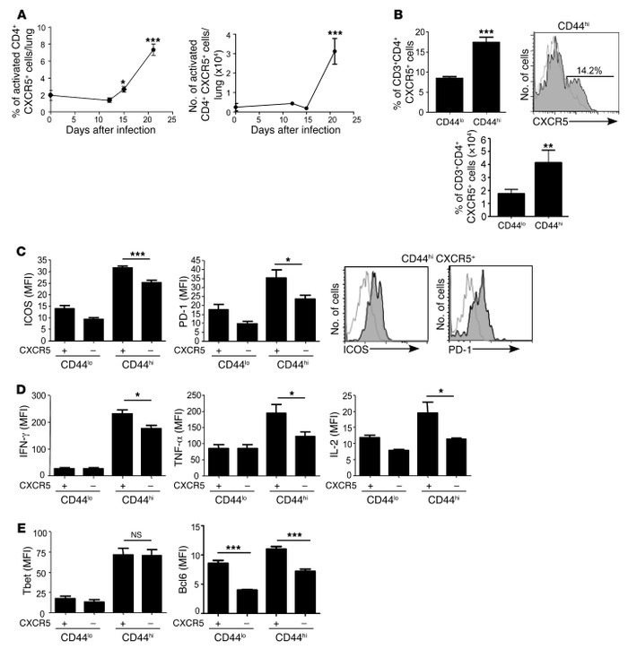 Activated CD4+CXCR5+ T cells accumulate in the lung during Mtb infection...