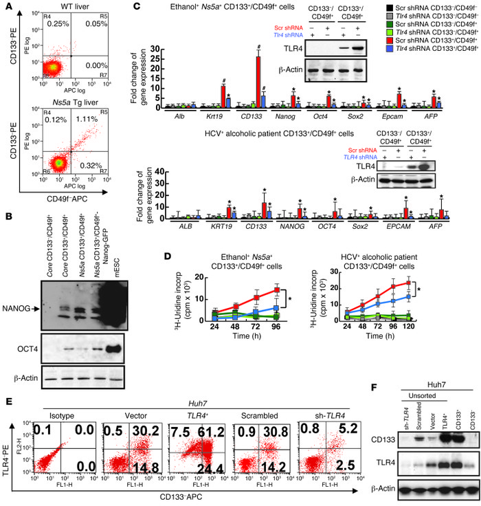 TLR4/NANOG–dependent TICs from liver tumors in alcohol-fed Ns5a Tg mice ...