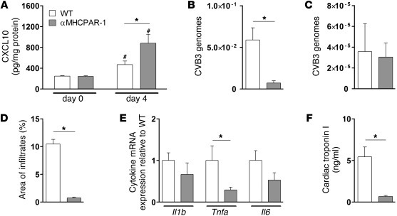 Overexpression of PAR-1 reduces CVB3-induced myocarditis. WT (white) and...