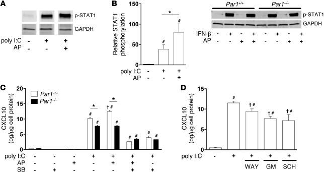 Effect of PAR-1 activation on poly I:C activation of STAT1 and CXCL10 ex...