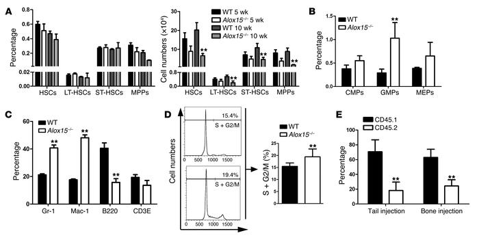 Effect of Alox15 deficiency on the function of normal HSCs in vitro. (A)...