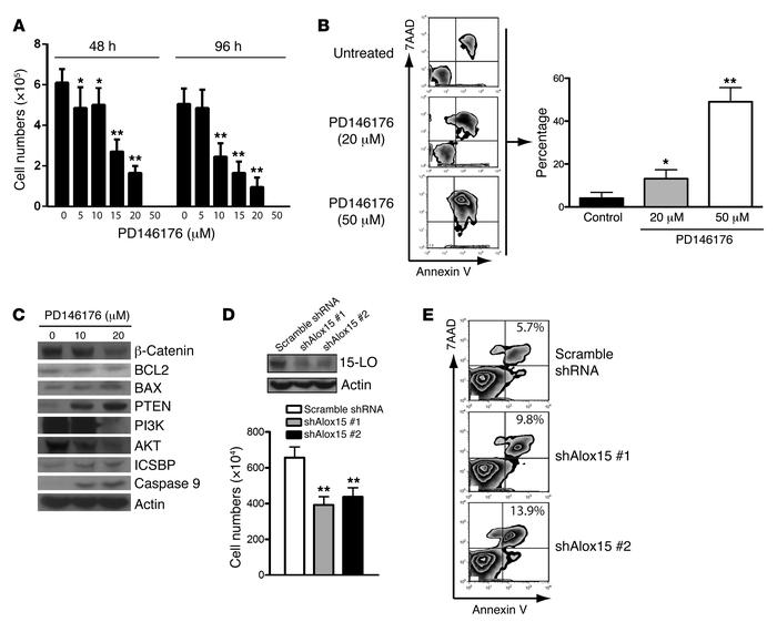 Inhibition of Alox15 function induces apoptosis of human CML cell lines....