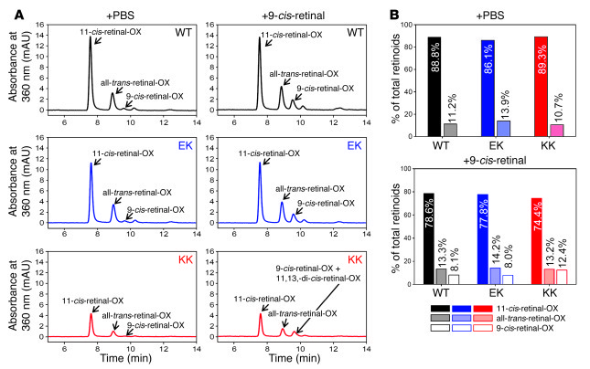 Regeneration of opsin with 9-cis-retinal in retinas isolated from P30 WT...