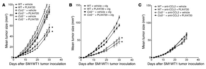 PLX4720 antitumor activity is host CCR2 dependent. (A) Groups of 5 WT, C...