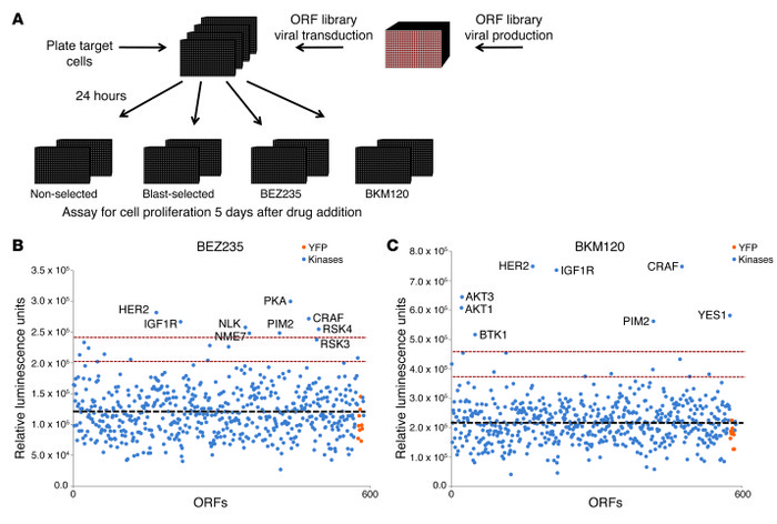 Overview of ORF kinase screen. (A) Schematic overview of screening proce...