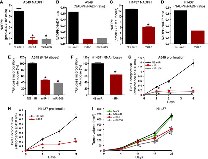 Ectopic expression of miR-1 and miR-206 miRNAs inhibits PPP activity and...