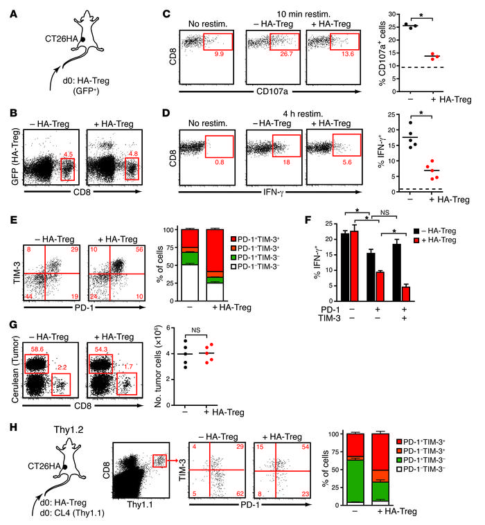 Tumor Ag–specific Tregs aggravate a state of dysfunction of tumor-infilt...