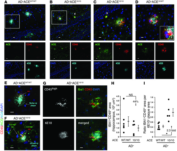 Infiltrating monocytic cells are increasingly associated with Aβ plaque ...