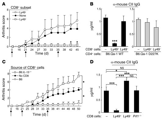 Infusion of CD122+CD44hiLy49+ CD8+ Tregs inhibits arthritis development....