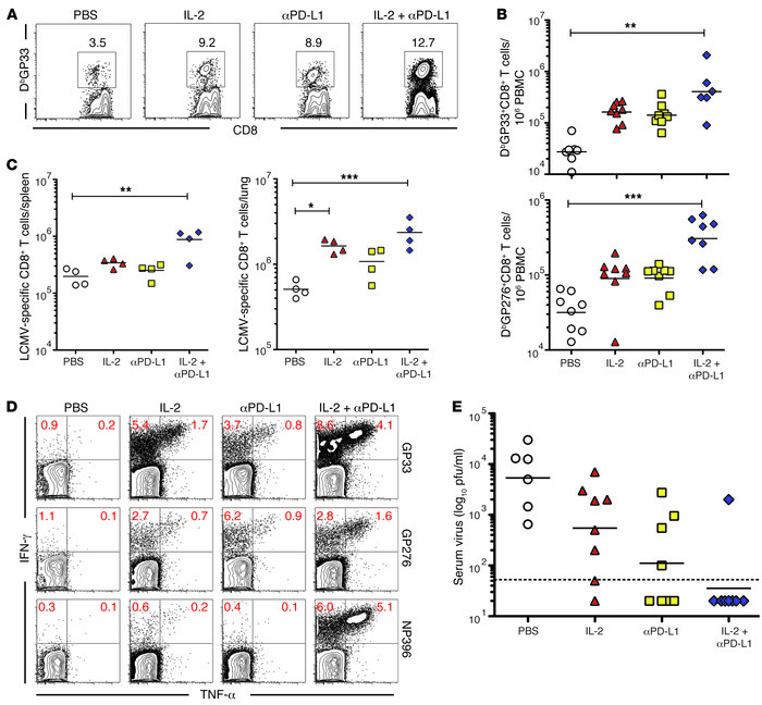 IL-2 therapy combined with PD-L1 blockade enhances antiviral CD8 T cell ...