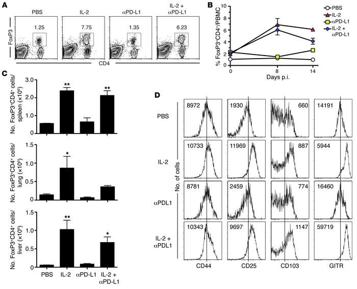 IL-2 therapy affects Tregs during chronic LCMV infection. C57BL/6 mice w...