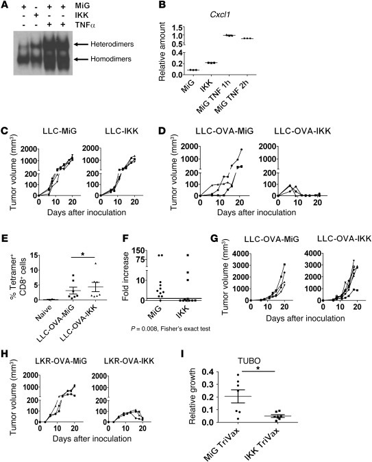 Impact of IKKβ-induced NF-κB on tumor rejection. (A) EMSA showing NF-κB ...