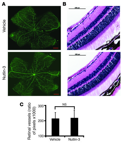 Nutlin-3 does not target preexisting blood vessels. (A and B) Adult mice...