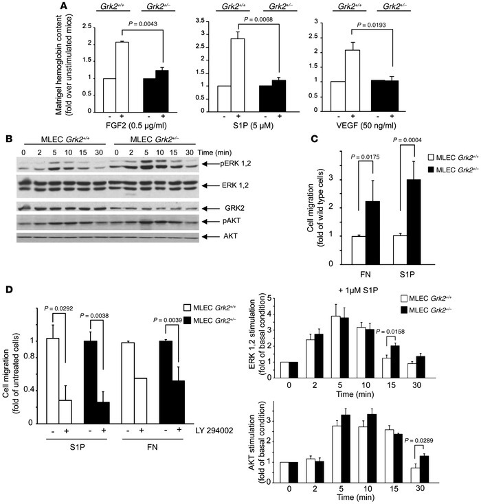 GRK2 deficiency results in an impaired in vivo angiogenesis, despite eff...