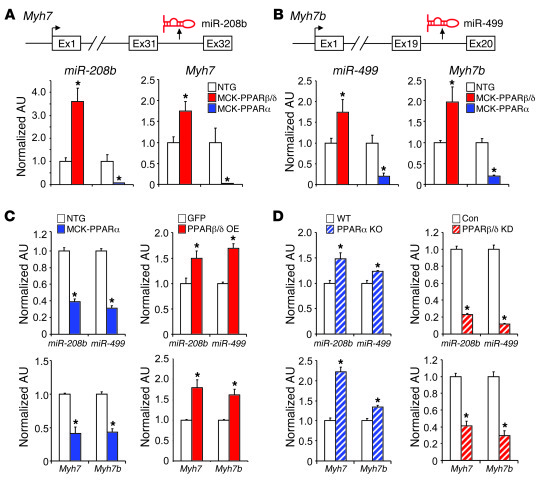 PPARβ/δ and PPARα control distinct miRNA subnetworks in skeletal muscle....