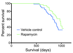 Rapamycin extended lifespan. Survival curves were calculated for rapamyc...