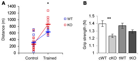 Endurance performance and grip strength of WT and KO mice after enduranc...