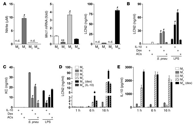 LCN2 is highly expressed in deactivated macrophages. (A) Primary AMs wer...