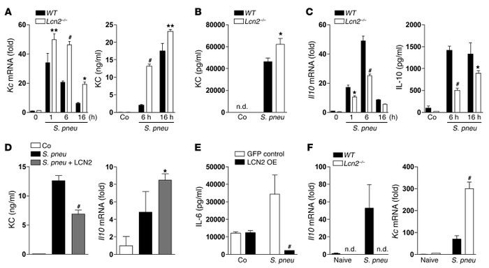 LCN2 skews macrophages toward a deactivated phenotype. (A and C) WT and ...