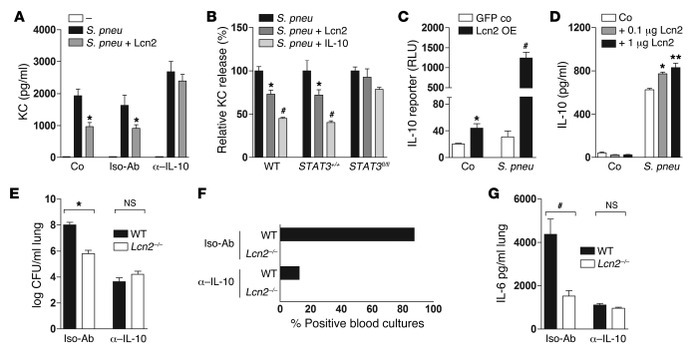 LCN2 impairs bacterial clearance in an IL-10–dependent manner. (A) KC le...