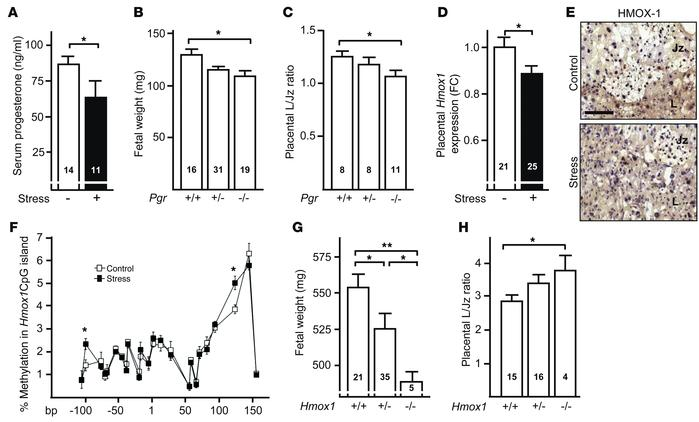 Progesterone levels and placental Hmox1 expression are reduced in fetal-...