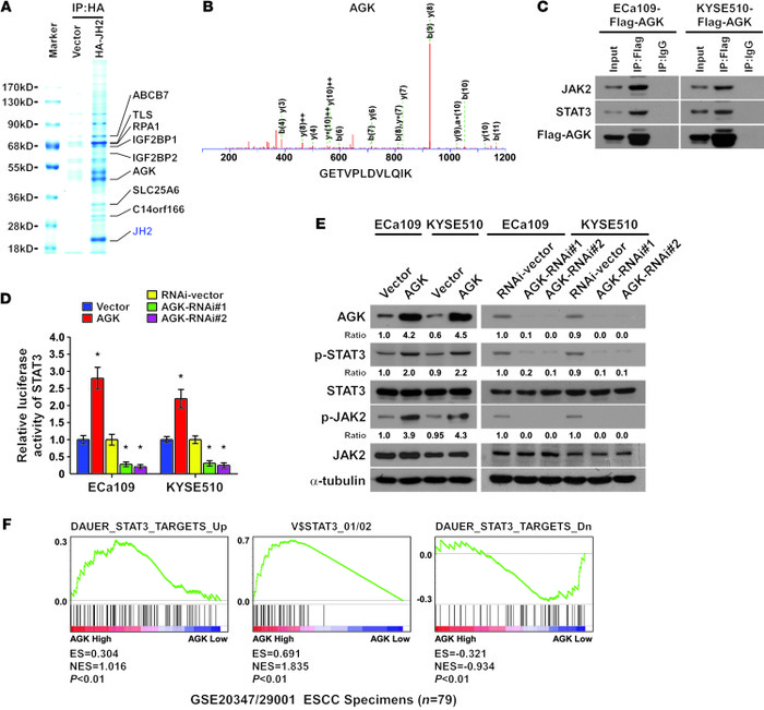 Identification of AGK as a JH2 domain–interacting protein that activates...