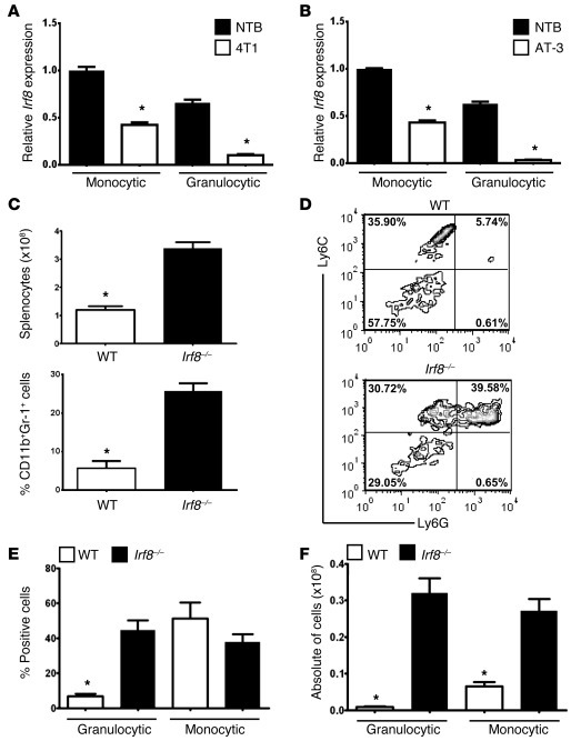 Irf8 expression is downregulated in tumor-induced MDSC subsets.   Irf8 ...