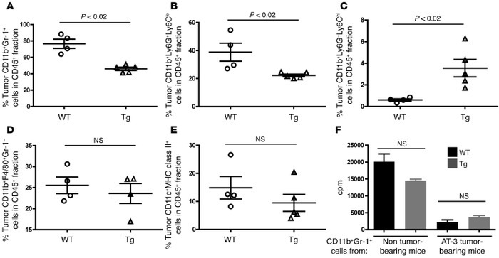 Intratumoral MDSC accumulation is also diminished in Irf8-Tg mice.   Flo...