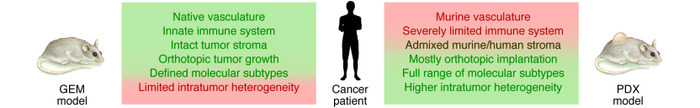Comparative analysis of GEM and PDX models to mimic human malignancies. ...