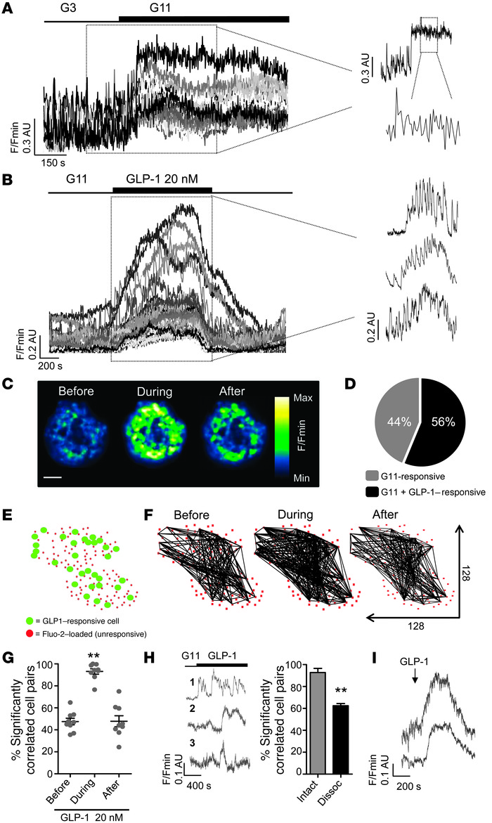 GLP-1 activates a highly coordinated subnetwork of β cells. (A) β cells ...