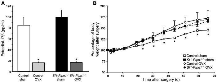 Ovariectomized Sf1-Ptpn1–/– mice do not gain additional weight on HFD. (...
