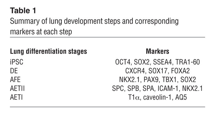 Summary of lung development steps and corresponding markers at each step