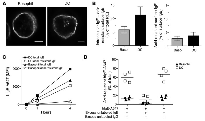IgE bound to FcεRI on DCs is efficiently internalized. (A) Intracellular...