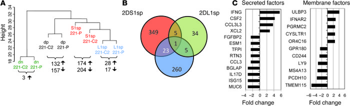 Transcriptional responses of KIR2DS1sp and KIR2DL1sp dNK subsets to 221-...