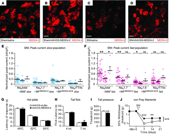 Delivery of rAAV2/6-NEDD4-2 viral vector decreases functional currents a...