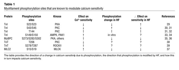 Myofilament phosphorylation sites that are known to modulate calcium sen...