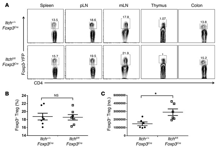 Itch is dispensable for Treg cell homeostasis. (A) Percentages of YFP+ T...