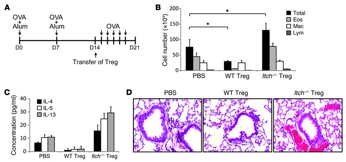 Itch-deficient Treg cells promoted higher Th2 responses in an OVA-induce...