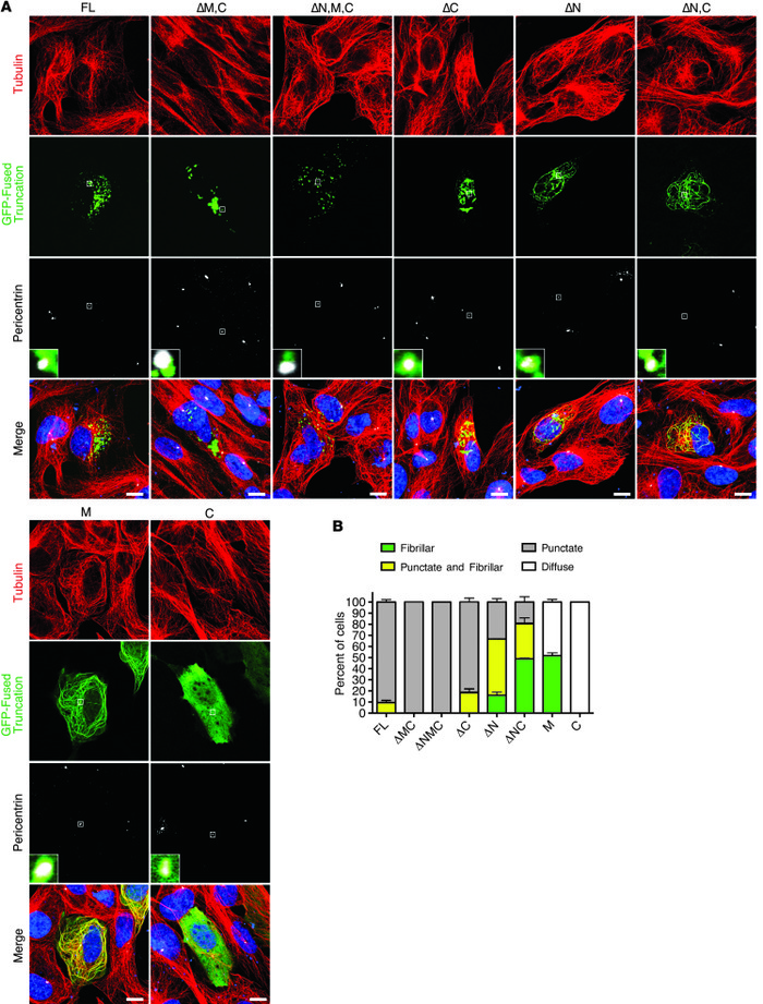 CEP290 region M mediates microtubule colocalization. (A) Fluorescence co...