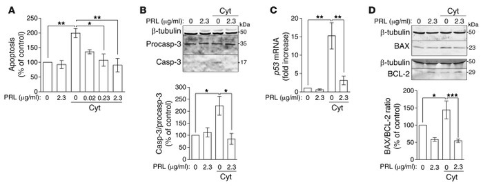 PRL inhibits Cyt-induced apoptosis of chondrocytes in culture. (A) Prima...