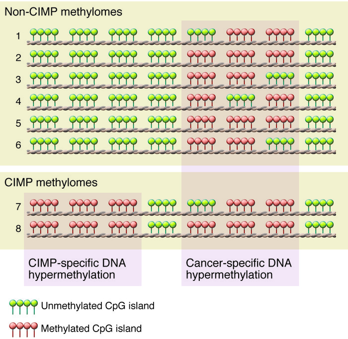 CIMP in human cancer. Eight individual methylomes are listed (numbered 1...