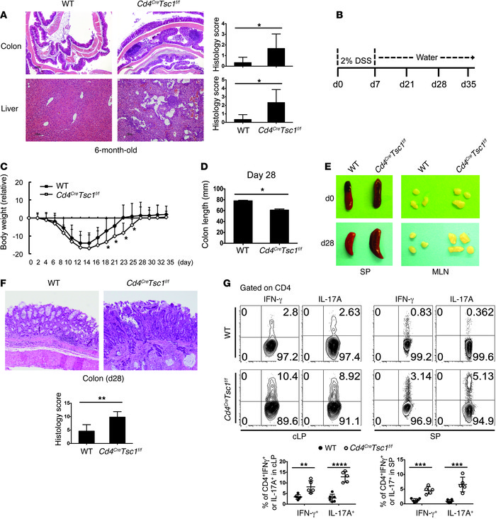 TSC1 function in T cells preserves intestinal homeostasis. (A) H&E s...