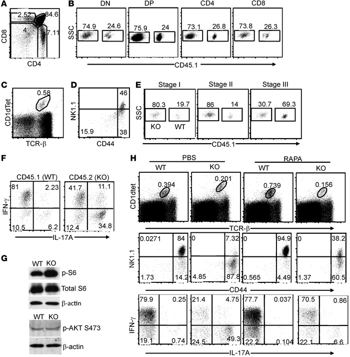 TSC1 inhibits mTORC1 to promote iNKT terminal maturation and iNKT-1 pred...
