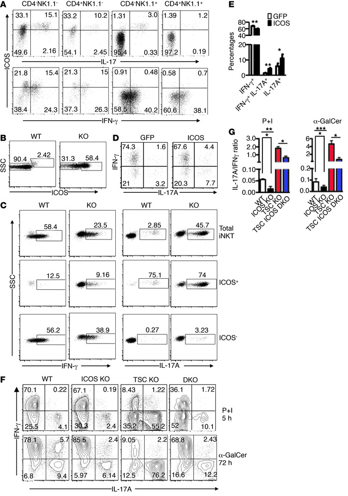 TSC1 ensures the iNKT-1/iNKT-17 dichotomy in part via by inhibiting ICOS...