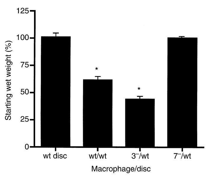 Role of macrophage MMPs in in vitro disc resorption. Discs from wild-typ...