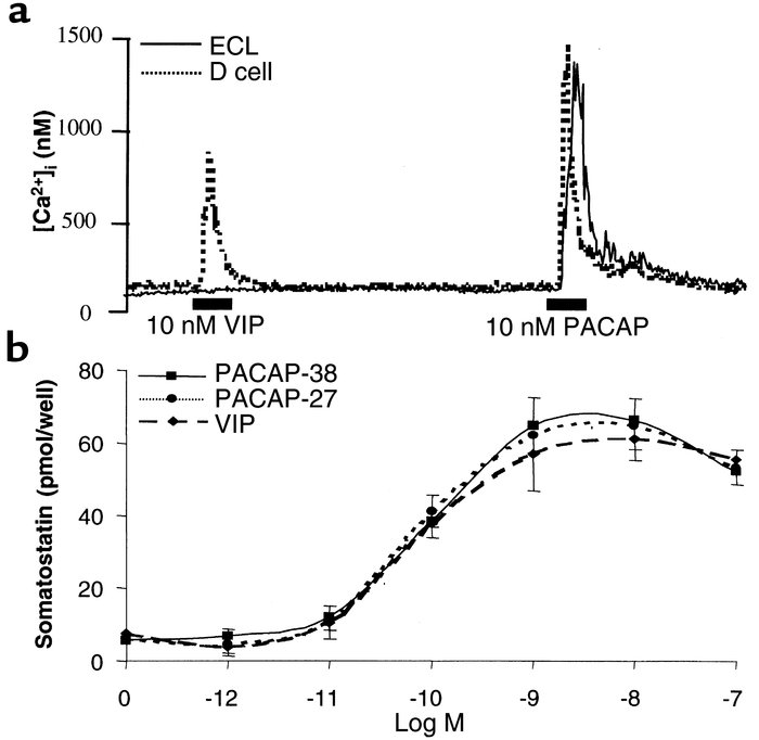 Effects of VIP and PACAP on D cells. (a) Comparison of the effects of VI...